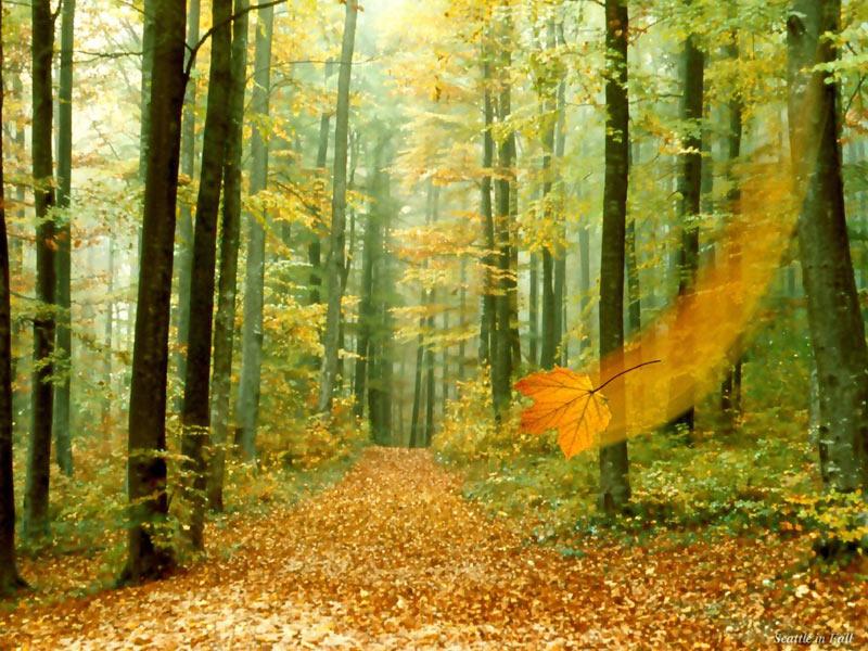 Jesen - Page 32 Poze-f11