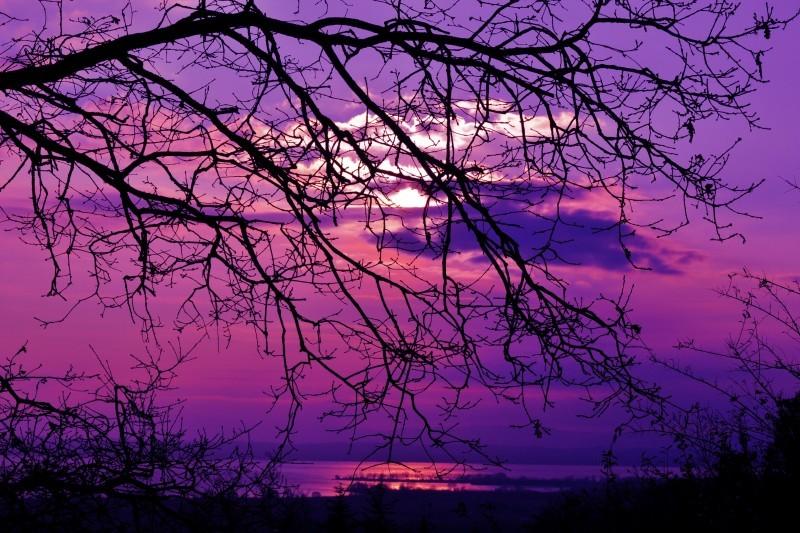 Landscape-pejzaži - Page 22 Purple11