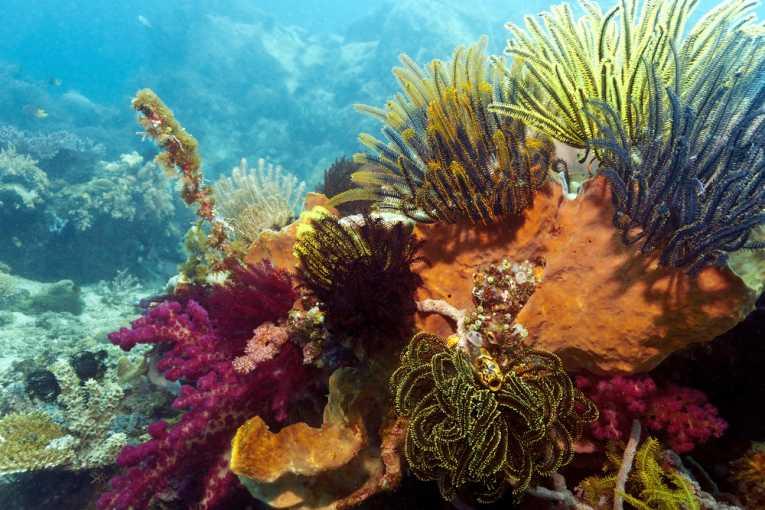 Podvodni svet (osim riba) - Page 11 Reef210