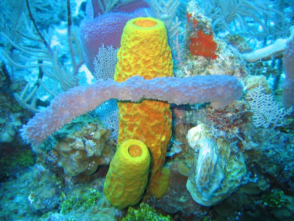 Podvodni svet (osim riba) - Page 11 Reef3810