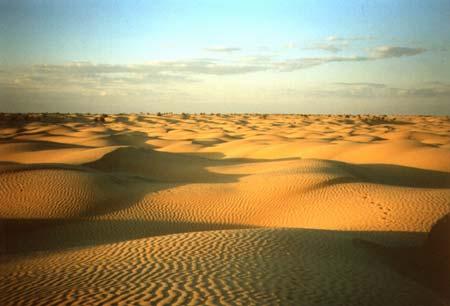 Pustinje - Page 39 Sahara10