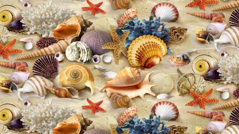 školjke - Page 8 Sea-sh11