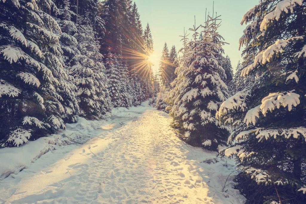 Zimski pejzaži-Winter landscapes - Page 13 Snow-c12