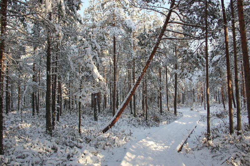 Zimski pejzaži-Winter landscapes - Page 13 Snow-f10