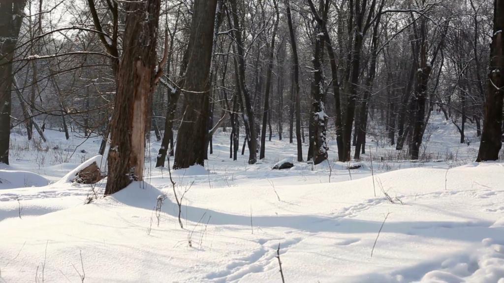 Zimski pejzaži-Winter landscapes - Page 24 Snow-f10