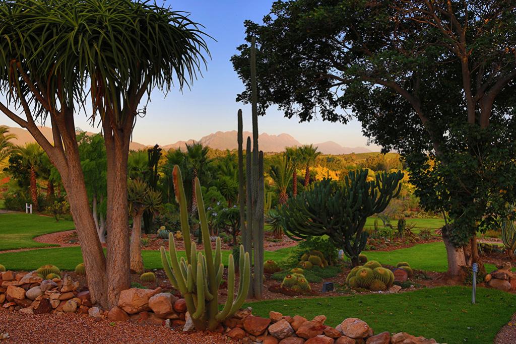 Kaktusi - Page 35 South_10