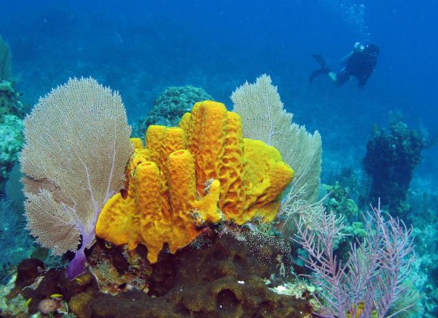 Podvodni svet (osim riba) - Page 10 Sponge10