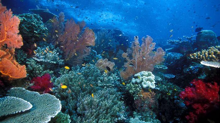 Podvodni svet (osim riba) - Page 12 Terumb10