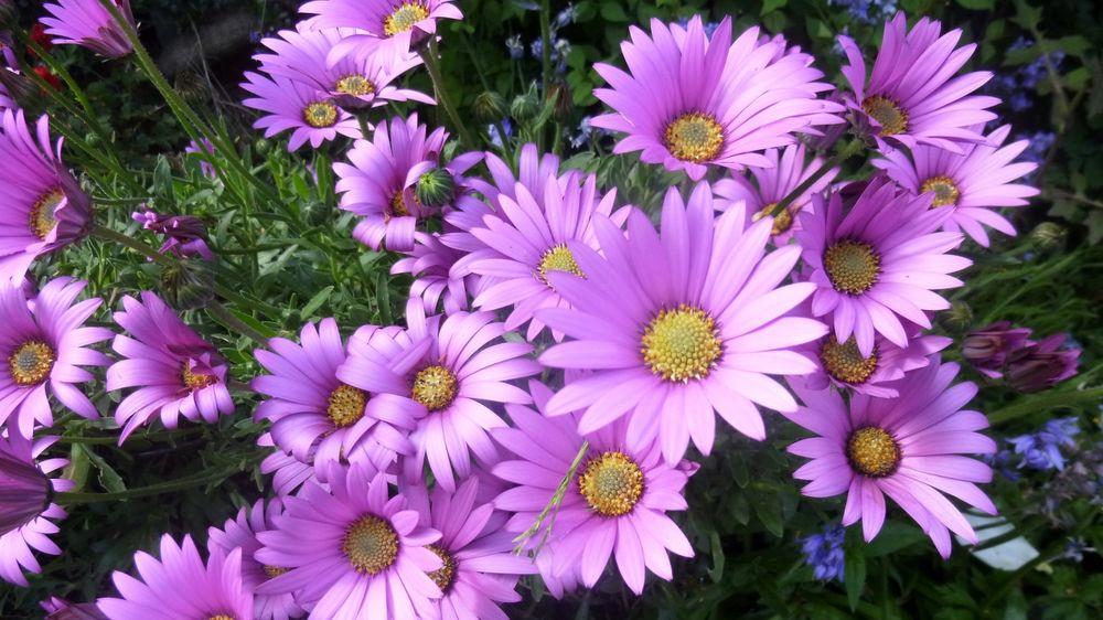 Cveće - Page 23 Tmb_1710