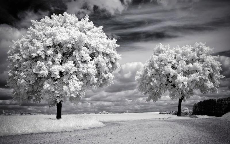 priroda u crno beloj boji - Page 24 Tmb_2511