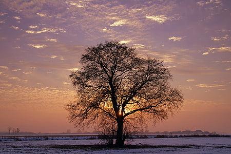 Drvo - Page 32 Tree-l13