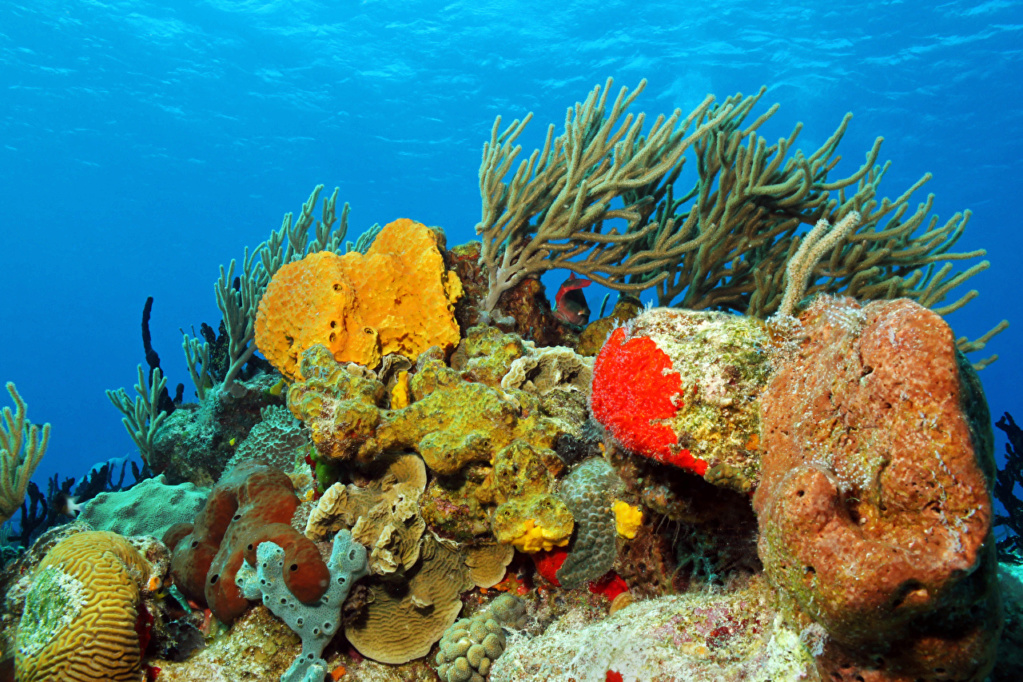 Podvodni svet (osim riba) - Page 11 Underw11
