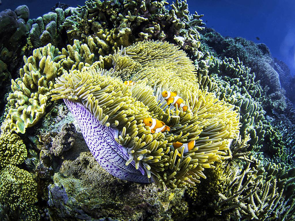 Podvodni svet (osim riba) - Page 11 Underw18