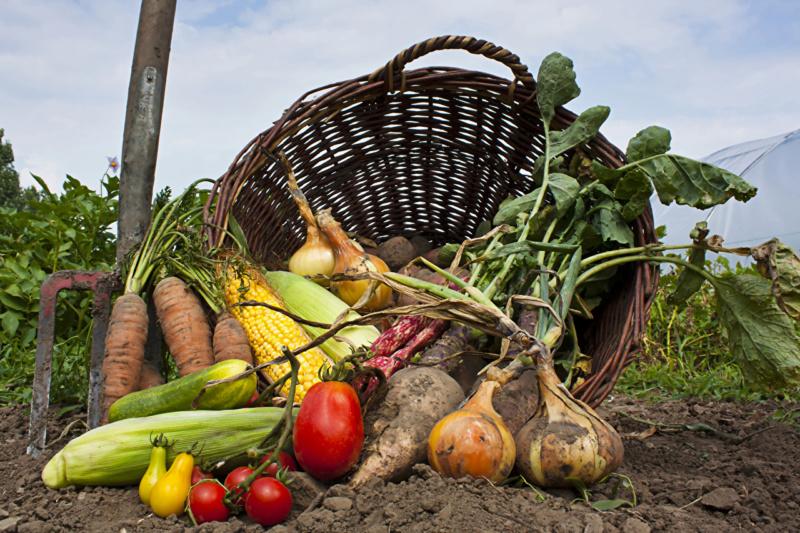 Povrće - Page 5 Vegeta42