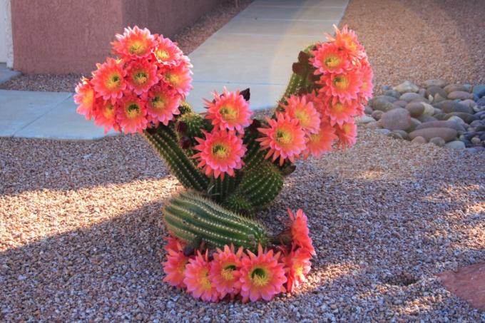 Kaktusi - Page 36 Vse-li10