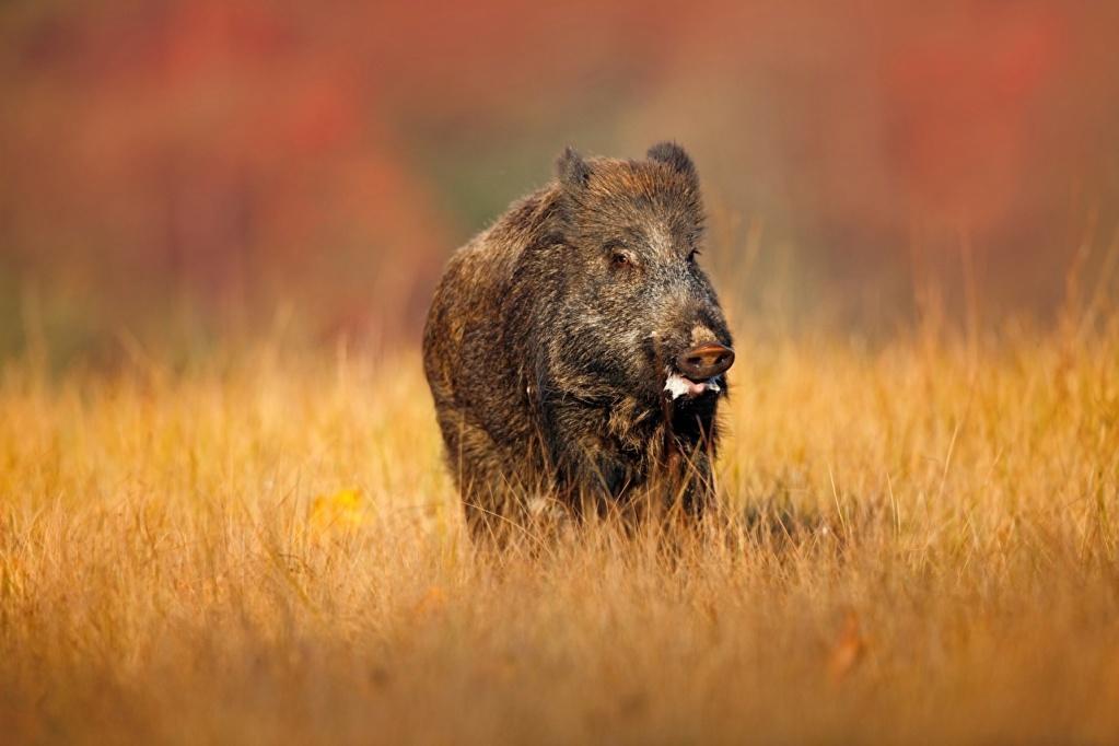 Divlje životinje Wild_b10