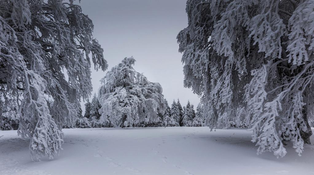 Zimski pejzaži-Winter landscapes - Page 4 Winte143