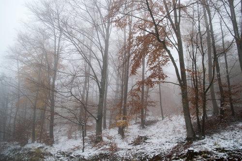 Zimski pejzaži-Winter landscapes - Page 3 Zimski10