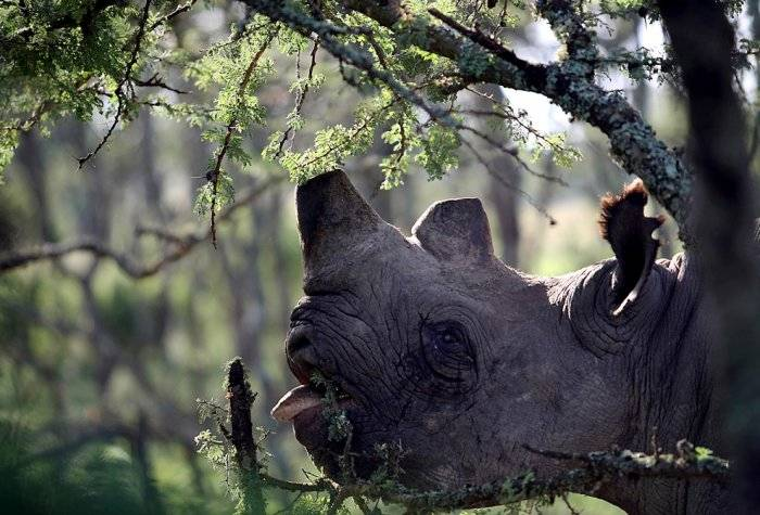 Divlje životinje Zivoti15