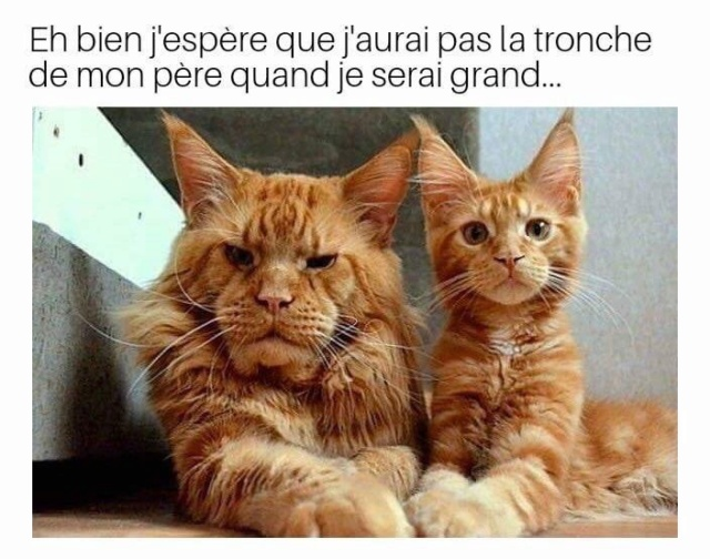 Topic des chats - Page 14 B5280510
