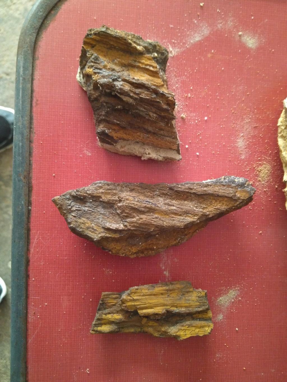 Madera fósil? Img_2021