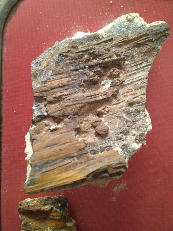 Madera fósil? Img_2022