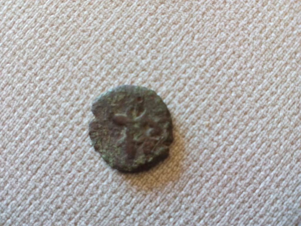 Romana minuscula Img_2047