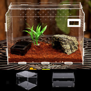 Les terrariums en acrylique  S-l30010