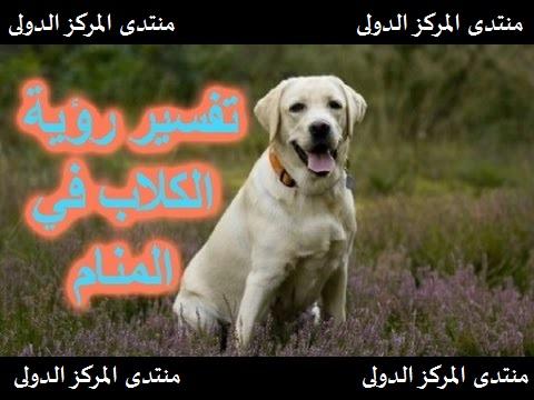 تفسير رؤية الكلاب في المنام لابن سيرين Oao-aa10