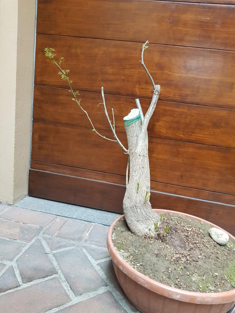 Salvata quercia dal fresa rive 20190413