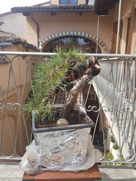 palo di silvestre 20200414