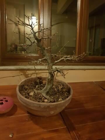 Il mio primo carpino 20190422
