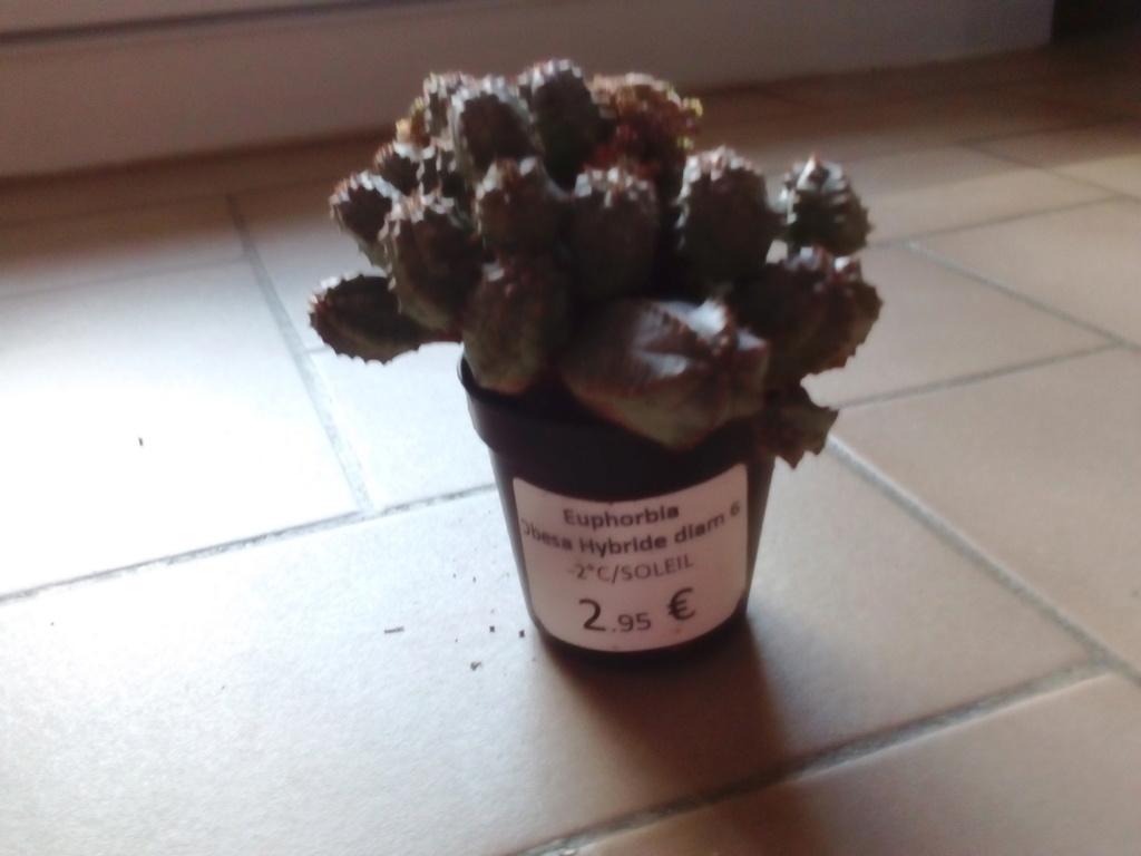 Quel hiver pour mes succulentes ? Img_2067
