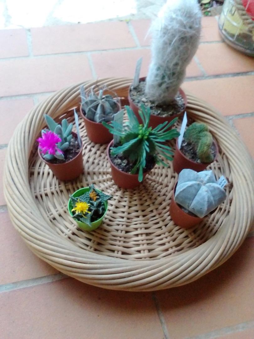 Quel hiver pour mes succulentes ? Img_2073