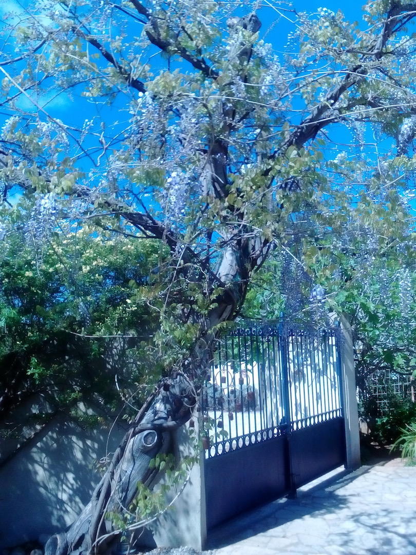 Le jardin de Patricia  Img_2264