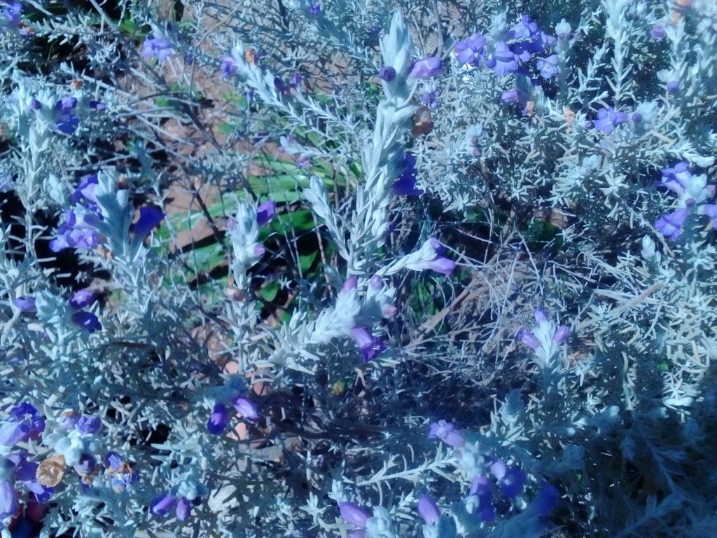 Le jardin de Patricia  Img_2265