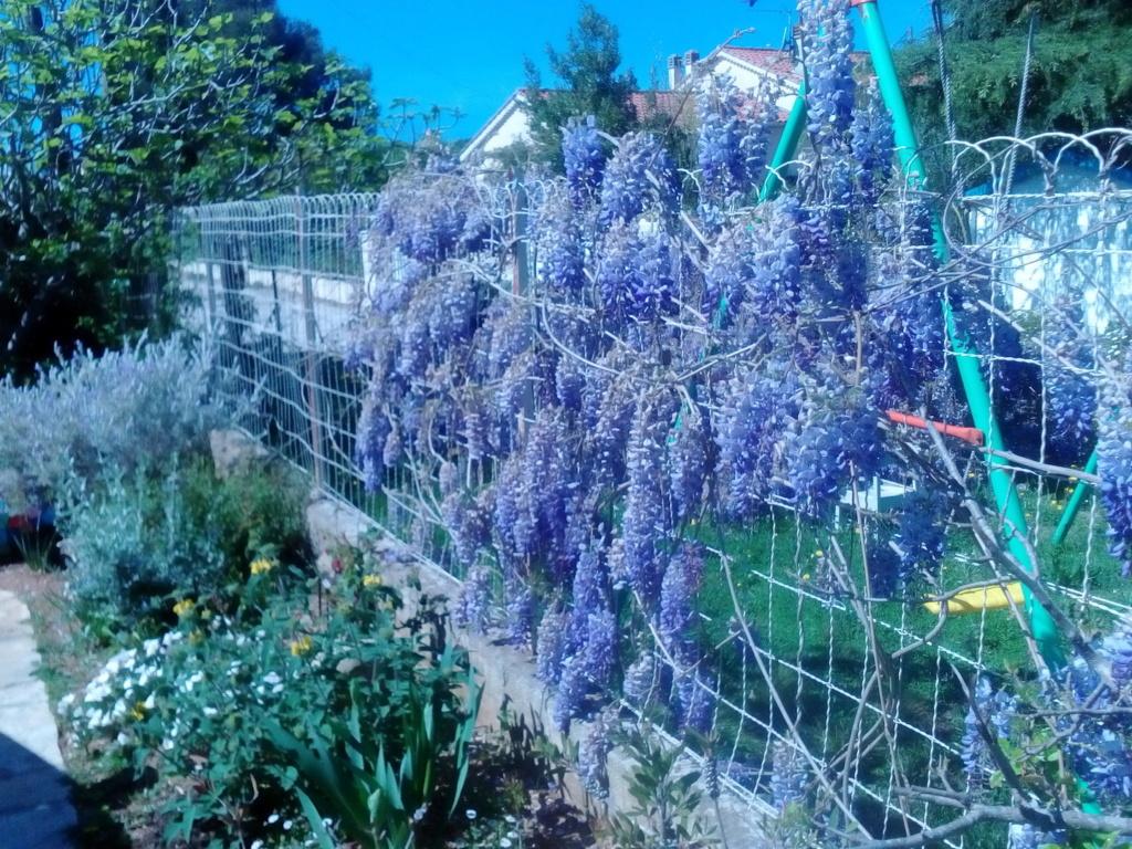 Le jardin de Patricia  Img_2267