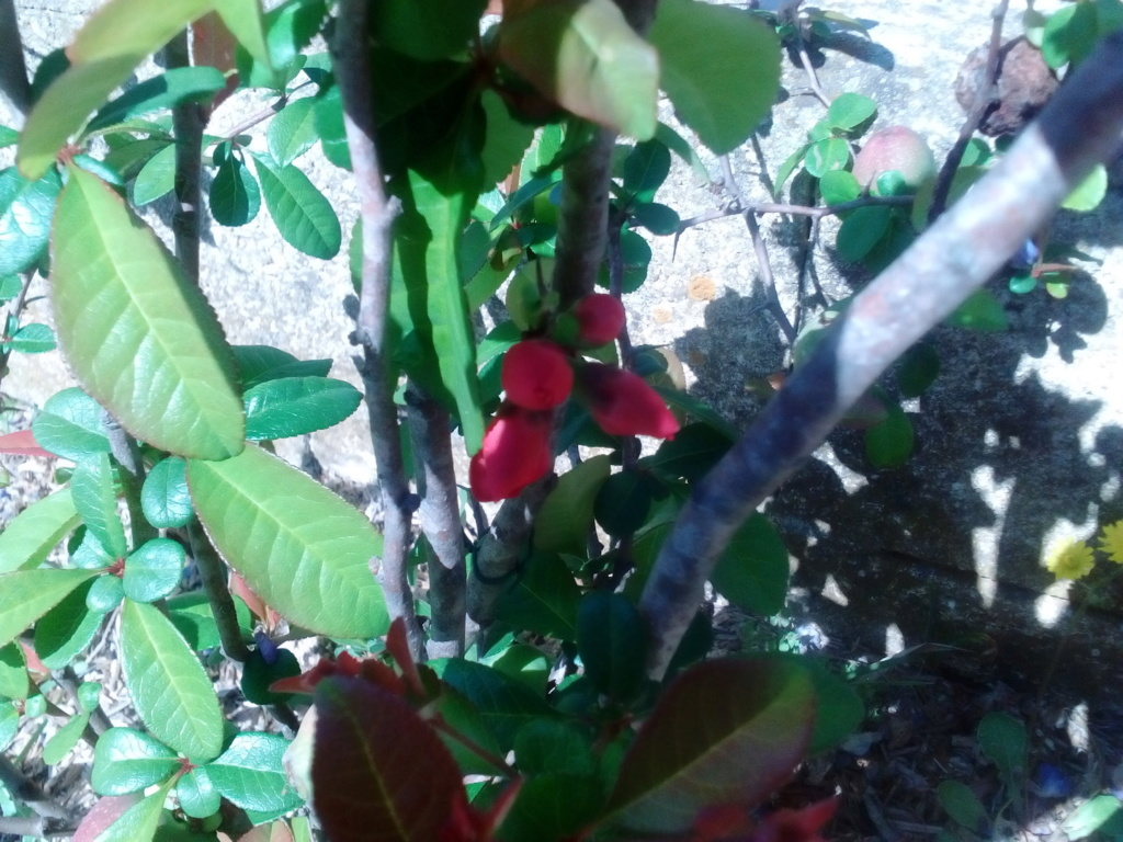 Le jardin de Patricia  Img_2268
