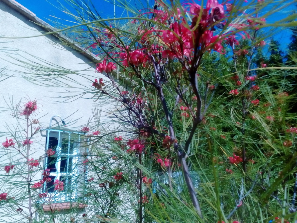 Le jardin de Patricia  Img_2269