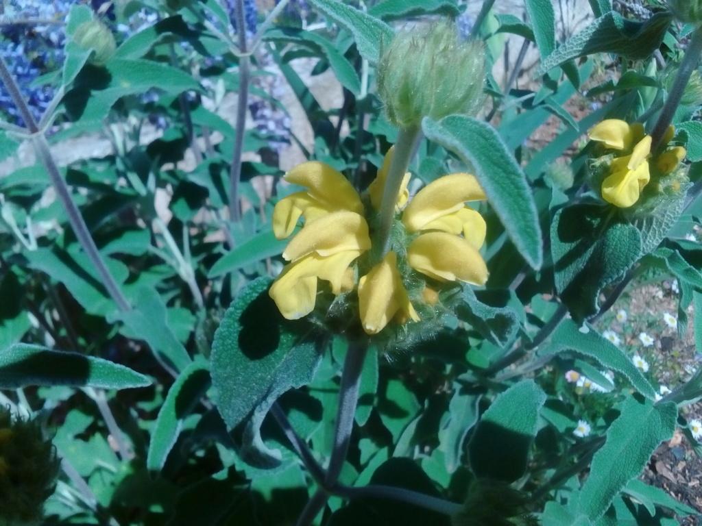 Le jardin de Patricia  Img_2271