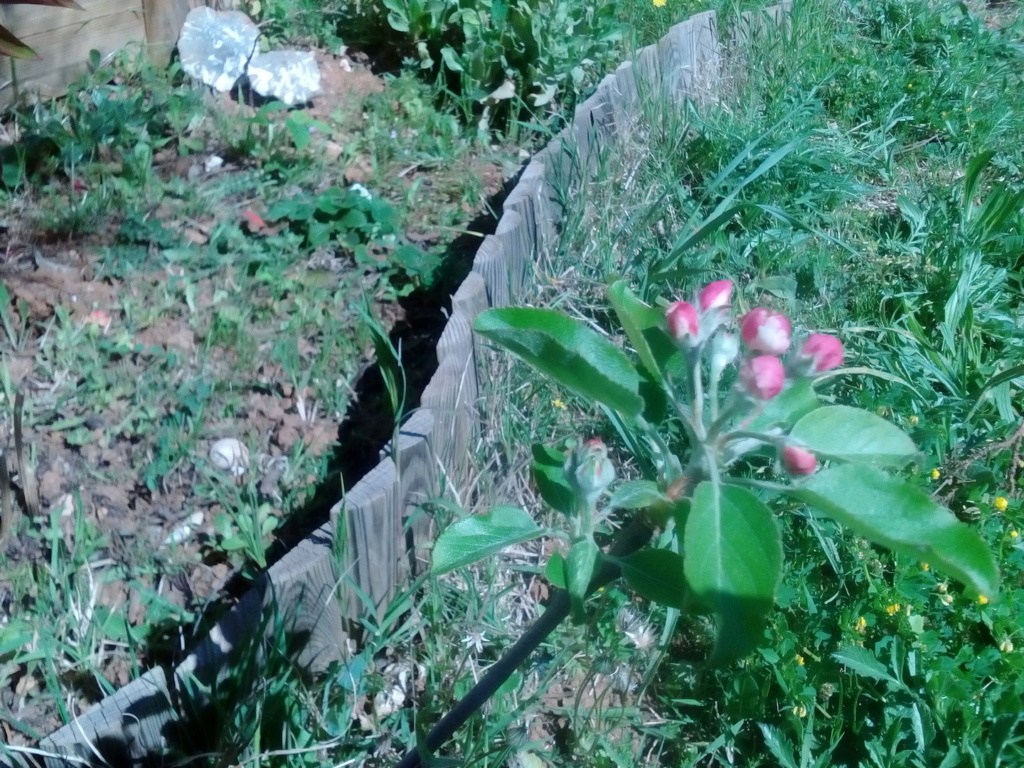 Le jardin de Patricia  Img_2272