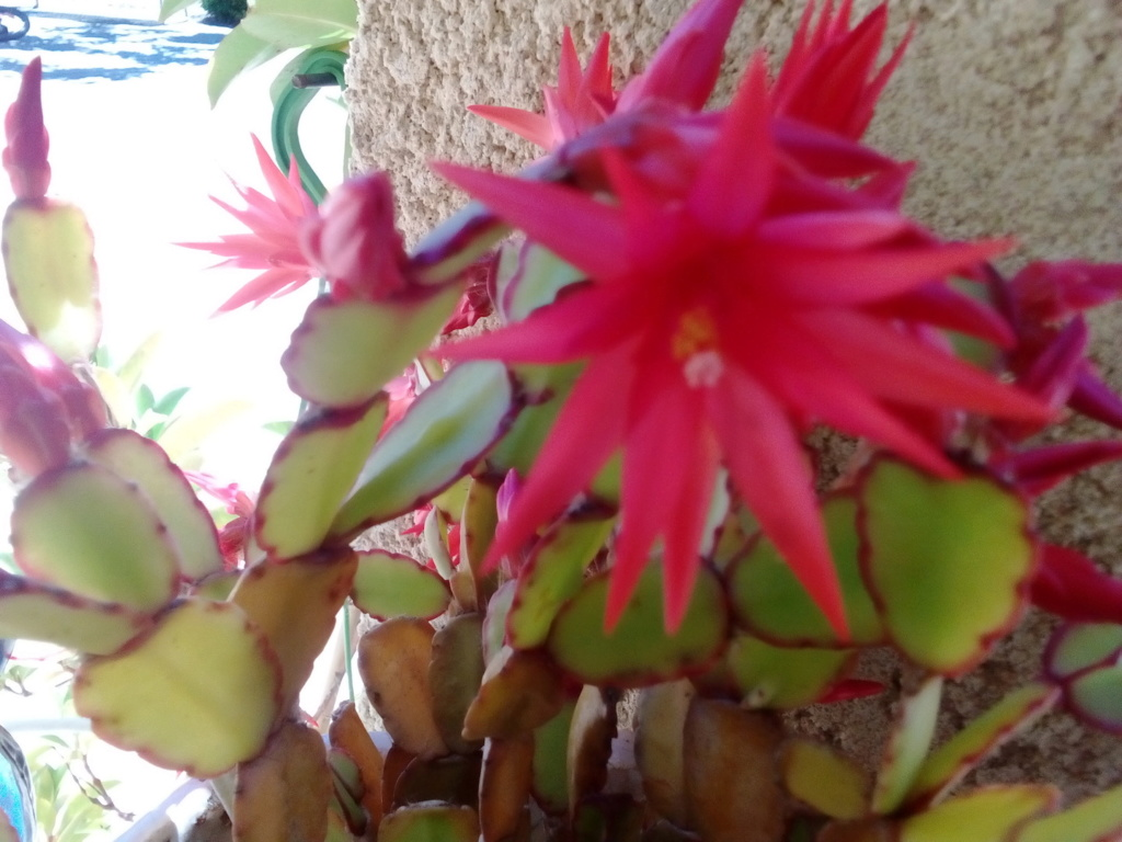Le jardin de Patricia  Img_2330