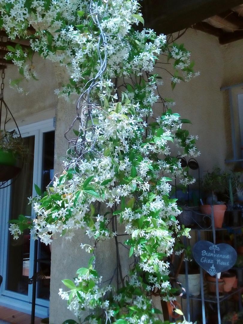 Le jardin de Patricia  Img_2334