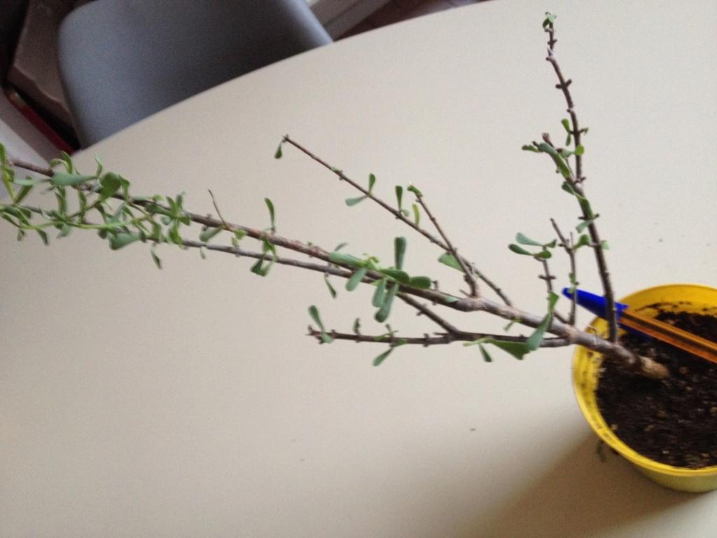 Connaissez vous cette plante ? Img_3114