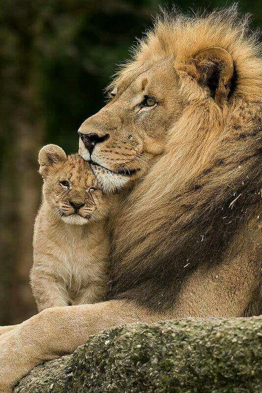 Fotos de animales de todo tipo incluyendo mascotas que más te gustan - Página 24 9abe9510