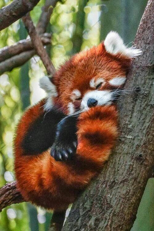 Fotos de animales de todo tipo incluyendo mascotas que más te gustan - Página 23 Cd908210
