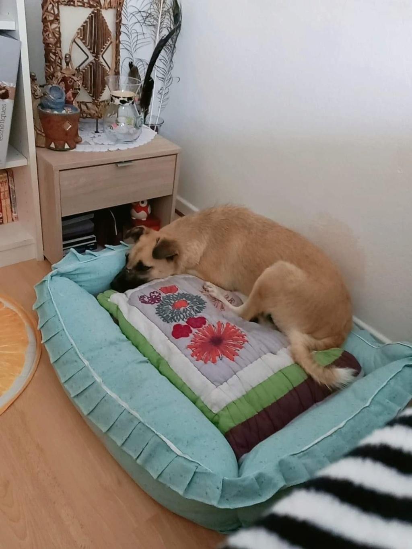 Salomé-femelle- fourrière de Târgu Frumos - reservée 67 02932e10