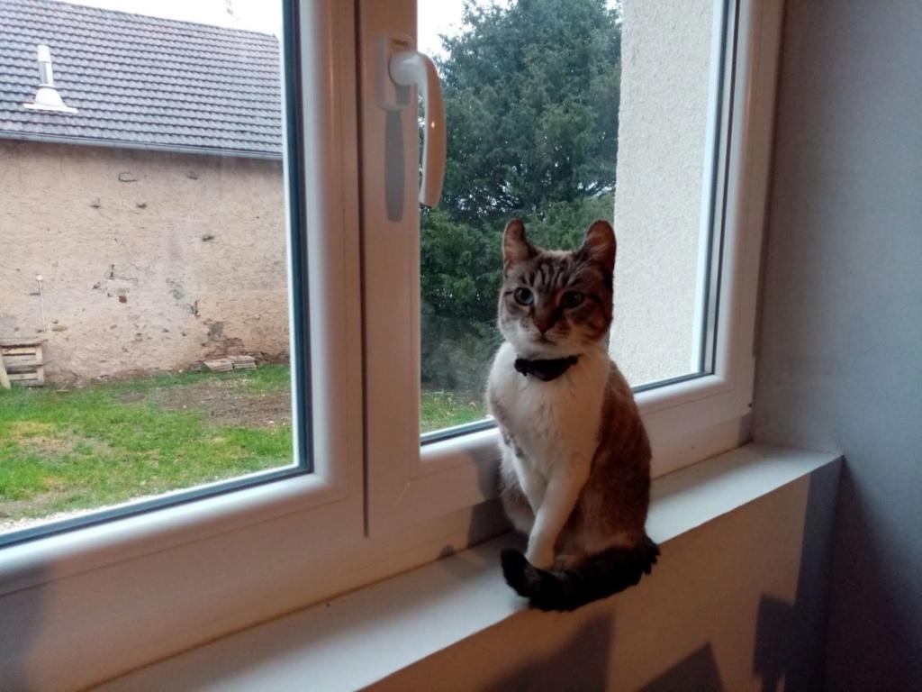 Fiona -  femelle -  refude d'Arad - réservée adoption (70)  Img_2820