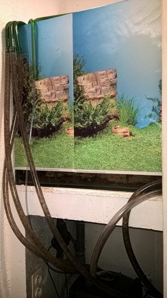 L'Eco-palu de Perceval Wp_20113
