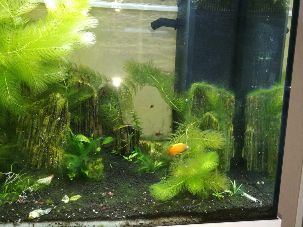 Q° multiples, algues, faible croissance plantes,osmoseur ... 110